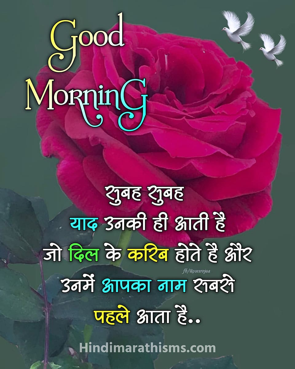 Good Morning Gulab Ka Phool Shayari
